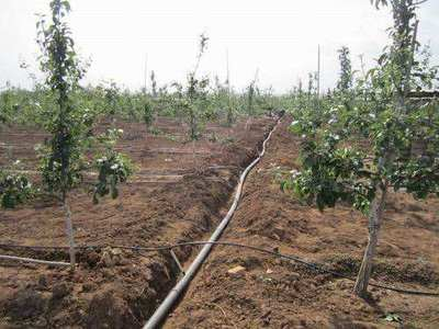枣庄千亩园林滴灌工程